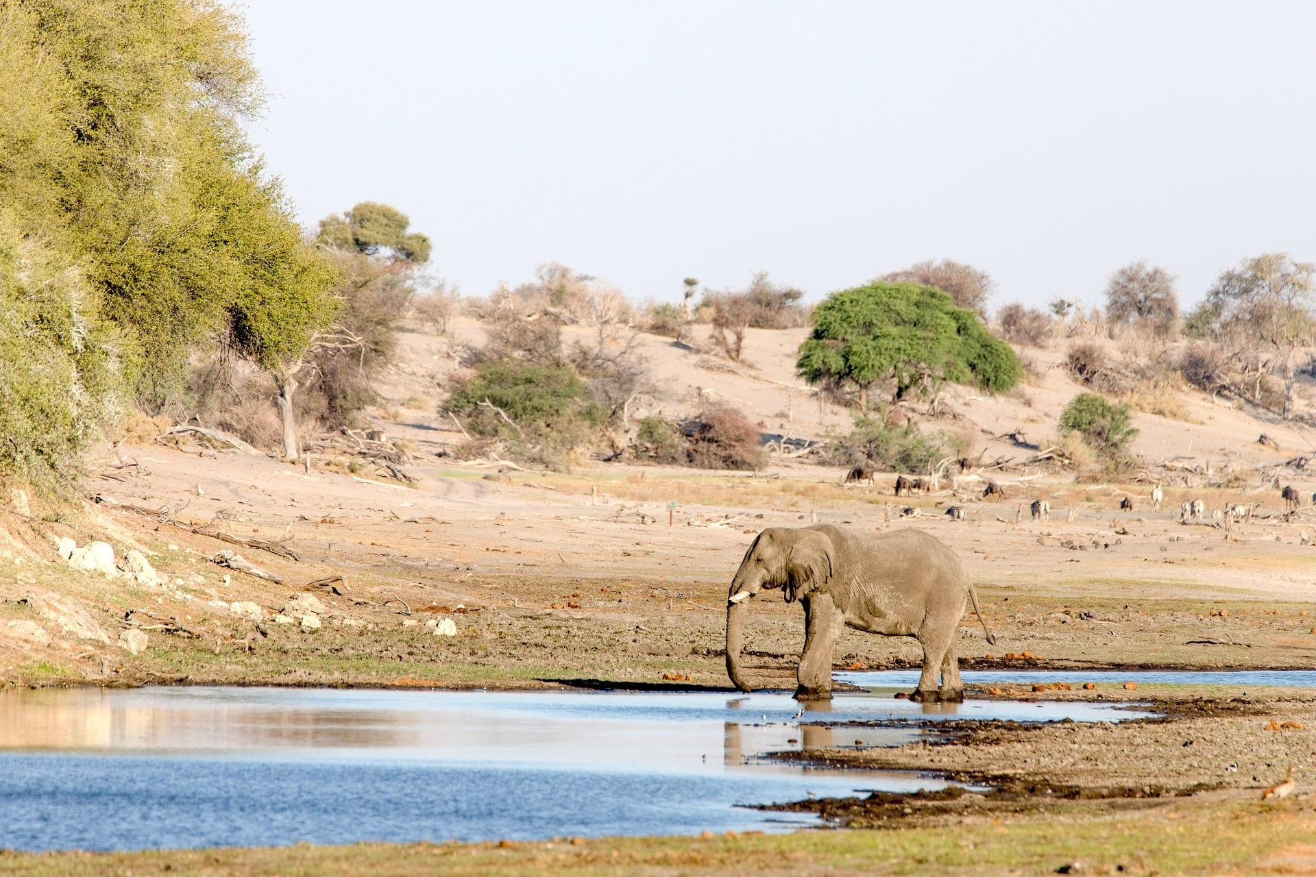 ALGEMEEN - Bushways - Zebra - Makgadikgadi NP - Boteti - IMG_5289-BW6
