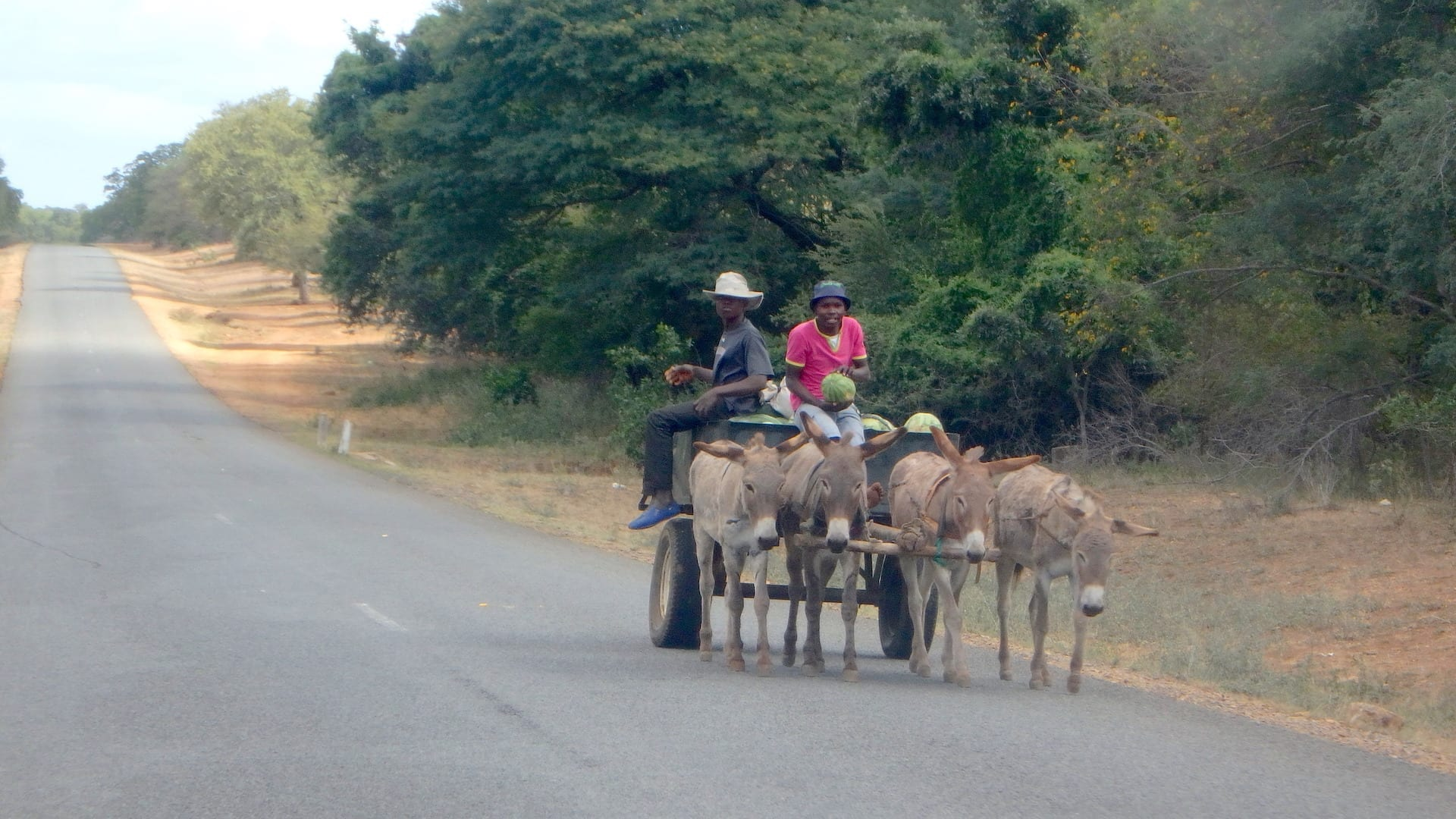 ALGEMEEN - ZIM - ezeltjes aan het werk