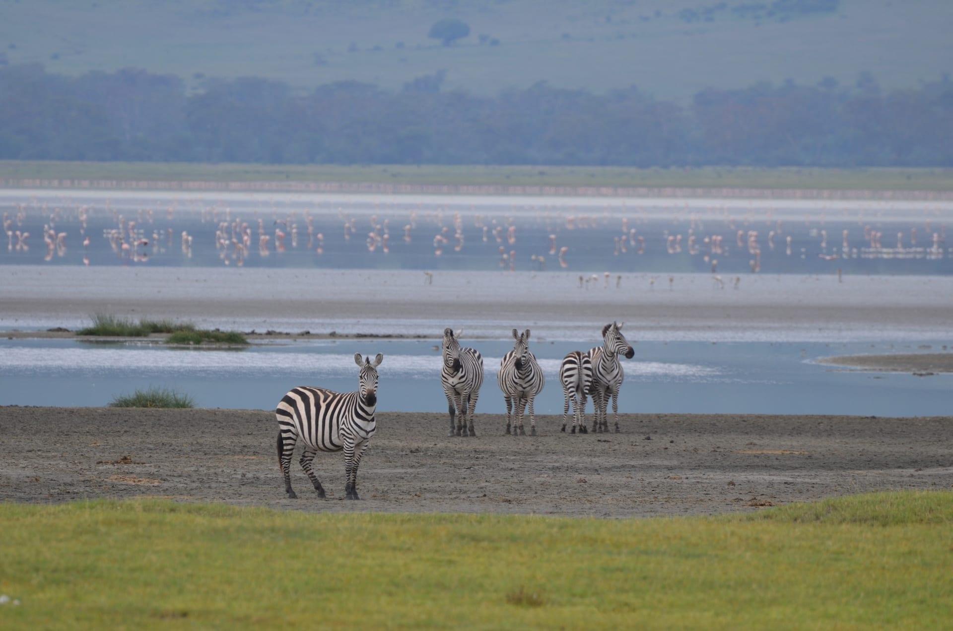 ALGEMEEN - Wild Life in Ngorongoro - KEN 2