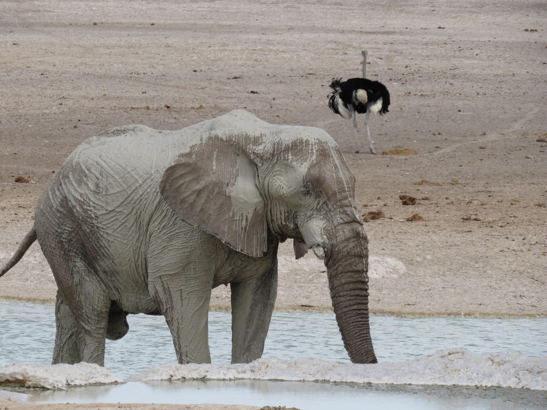 NAM 5 - ALGEMEEN - Etosha olifant - Namibia ACCOMMODATED Tour 3