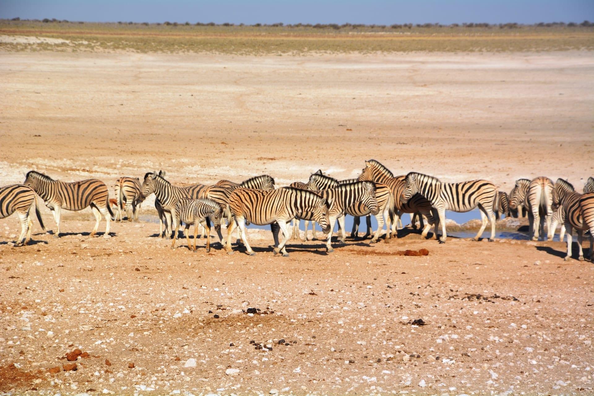 NAM 5 - ALGEMEEN - safari etosha - DSC_0080