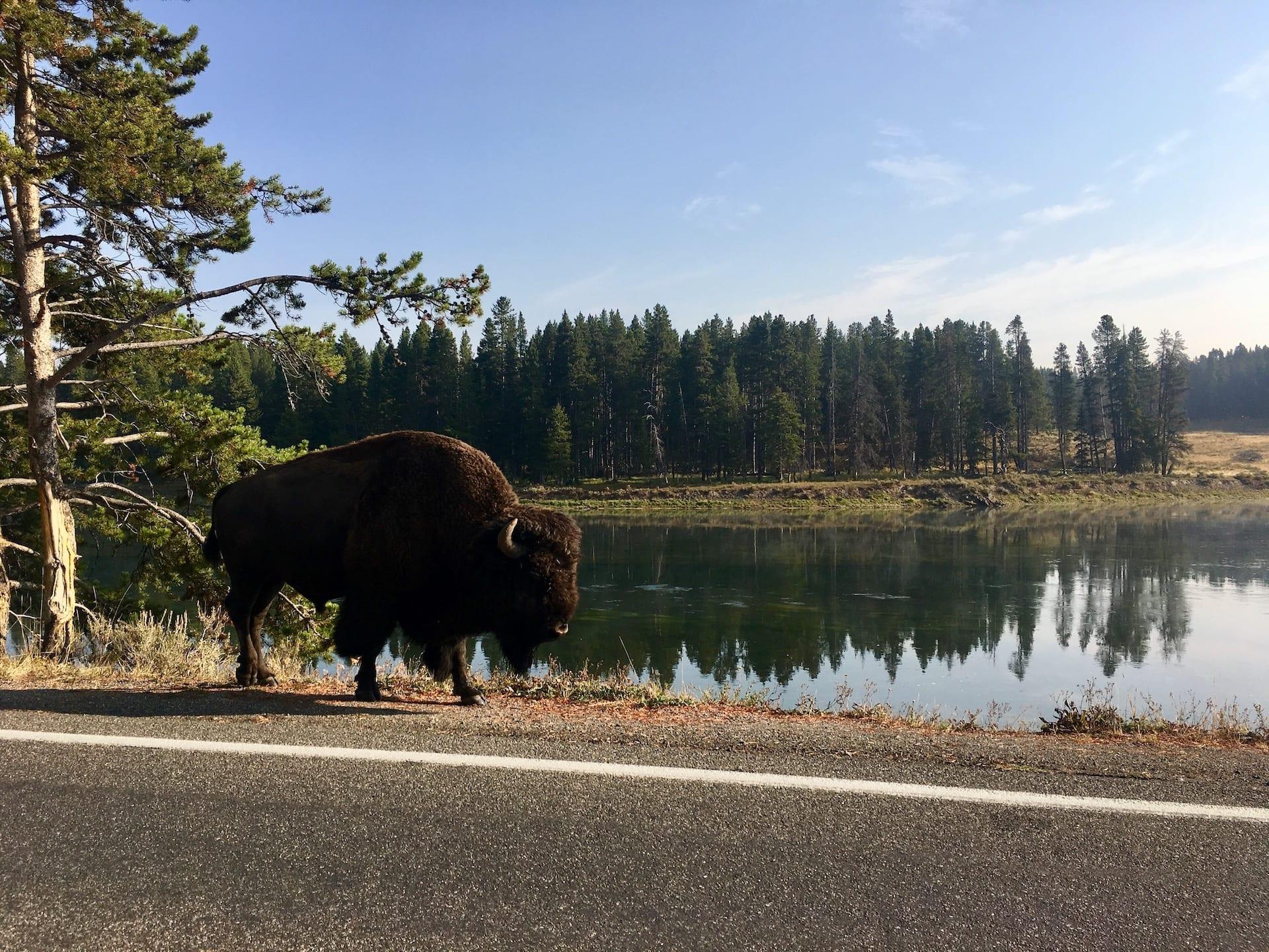 OVERIGE LANDEN - ALGEMEEN _ USD - Yellowstone NP IMG_2293