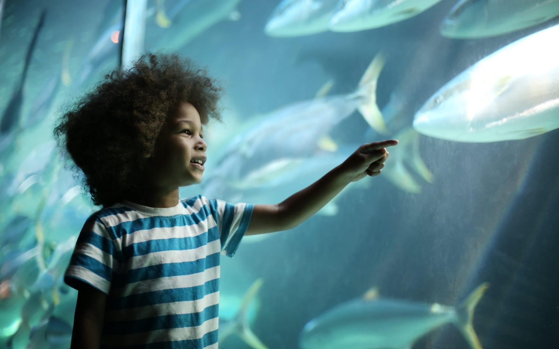 # FOTO - Two Oceans Aquarium