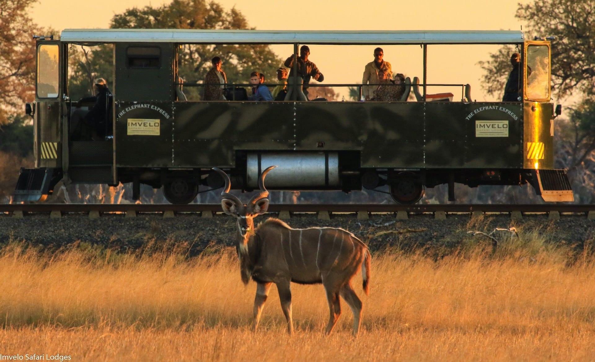 # FOTO 2 - Elephant Express - 9