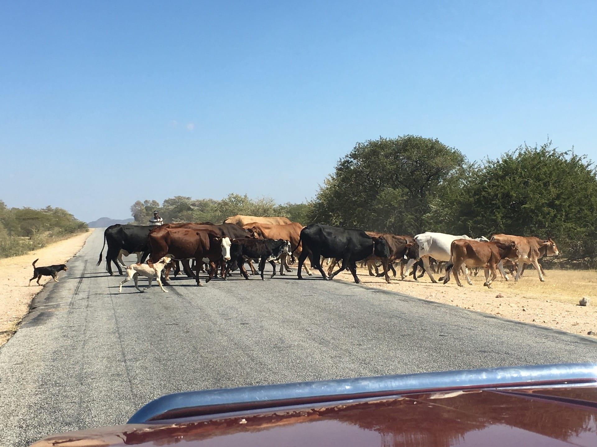 # FOTO 3 - Onderweg Great Zimbabwe - Matobo 1907
