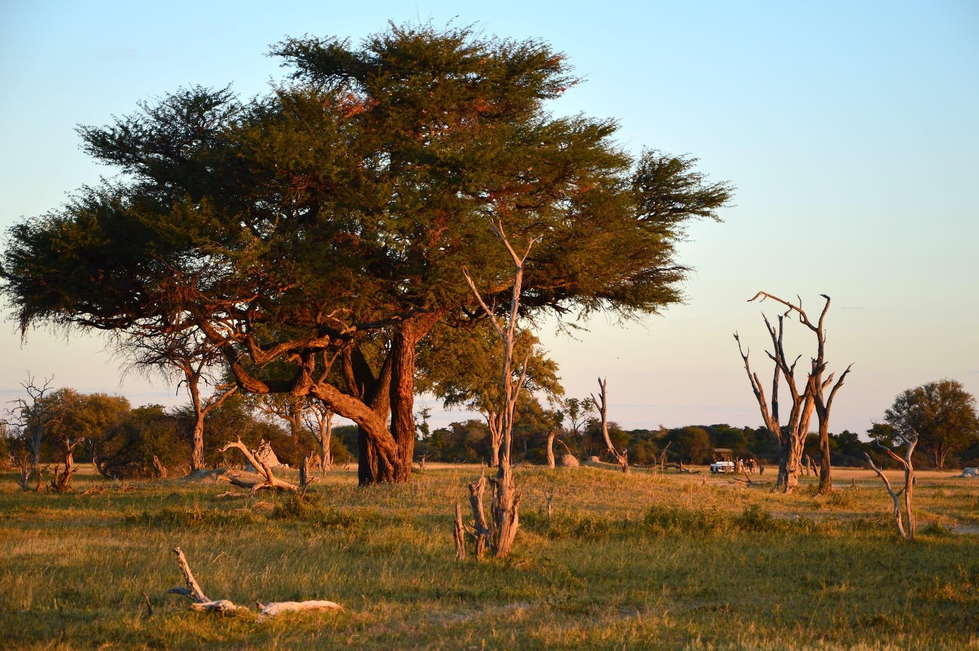 # FOTO 7 - Safari Hwange Camelthorn0088