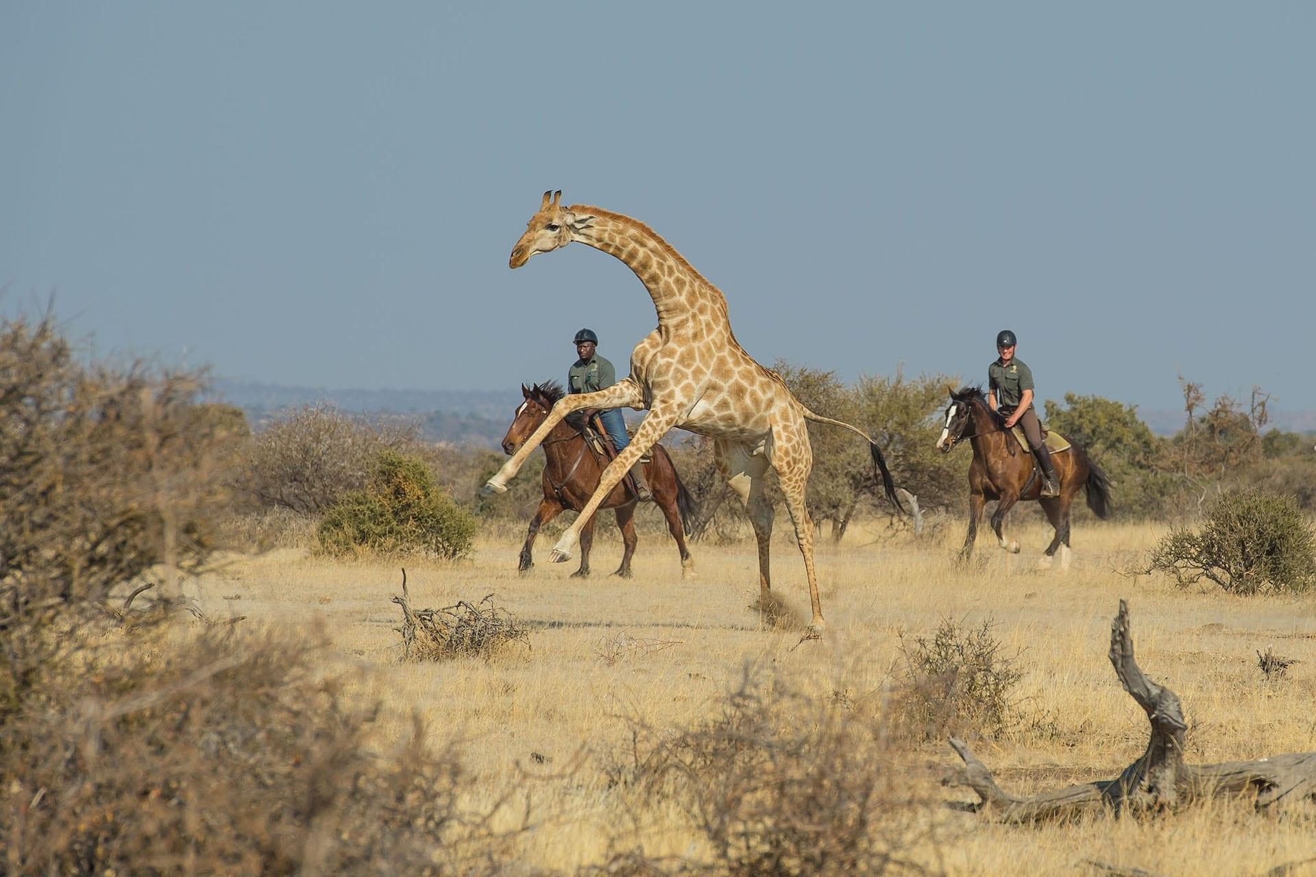 # FOTO - Horizon Horse safaris - dsc_8933