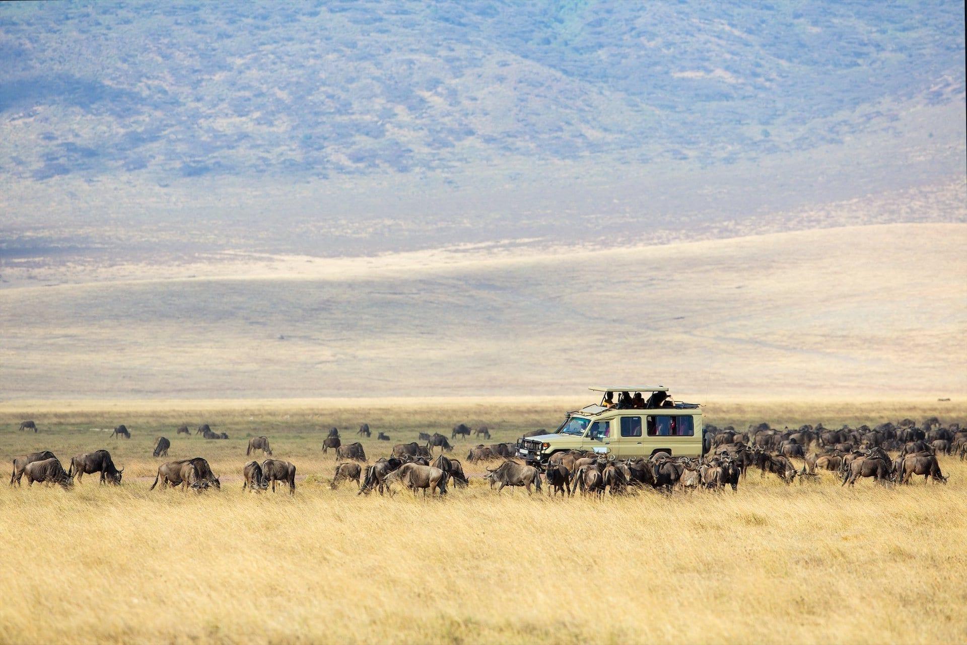 # FOTO -Safari Tanzania - 92332428_10158343327194171_5957269362111938560_o