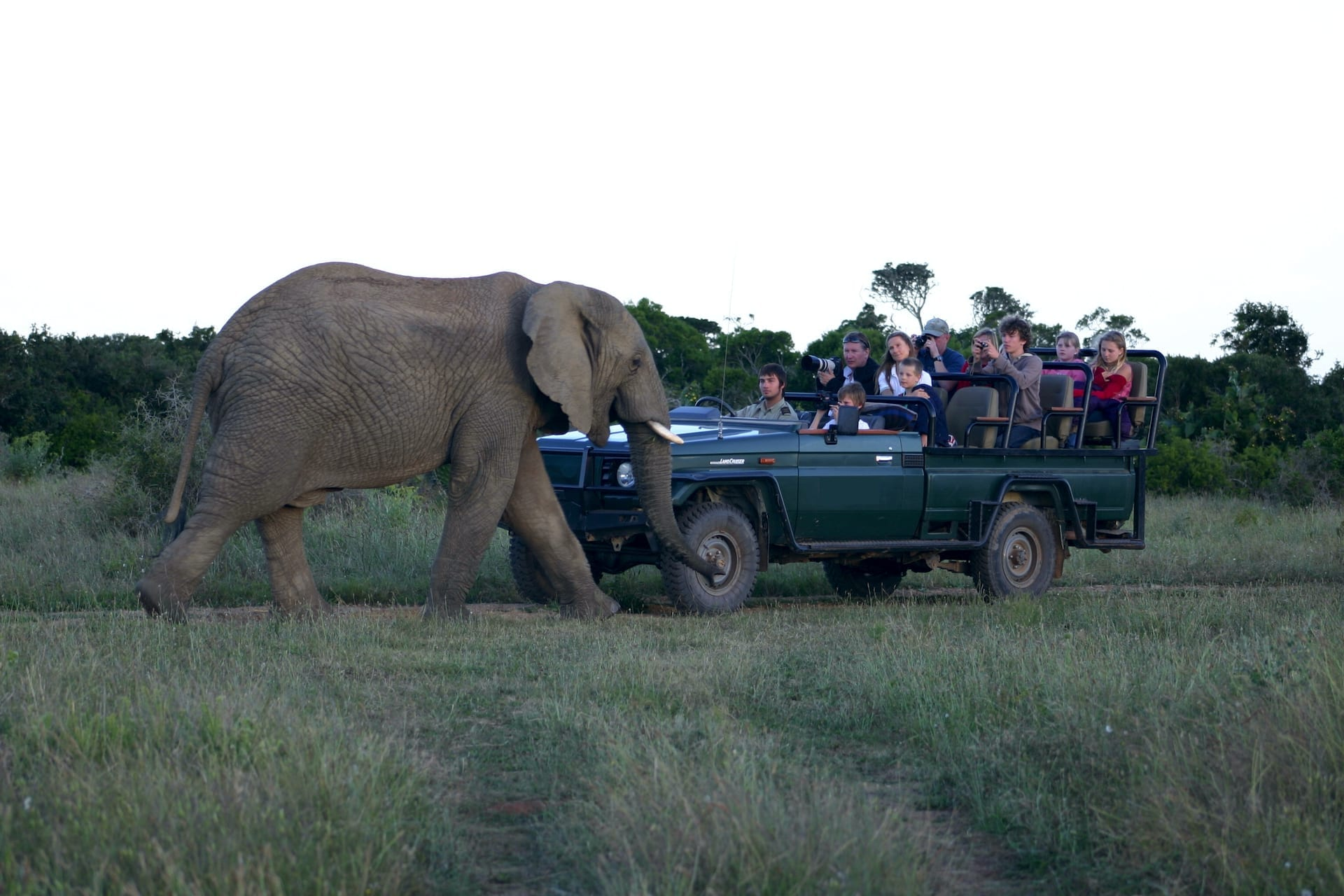 # FOTO - kariege safari 2 kopie