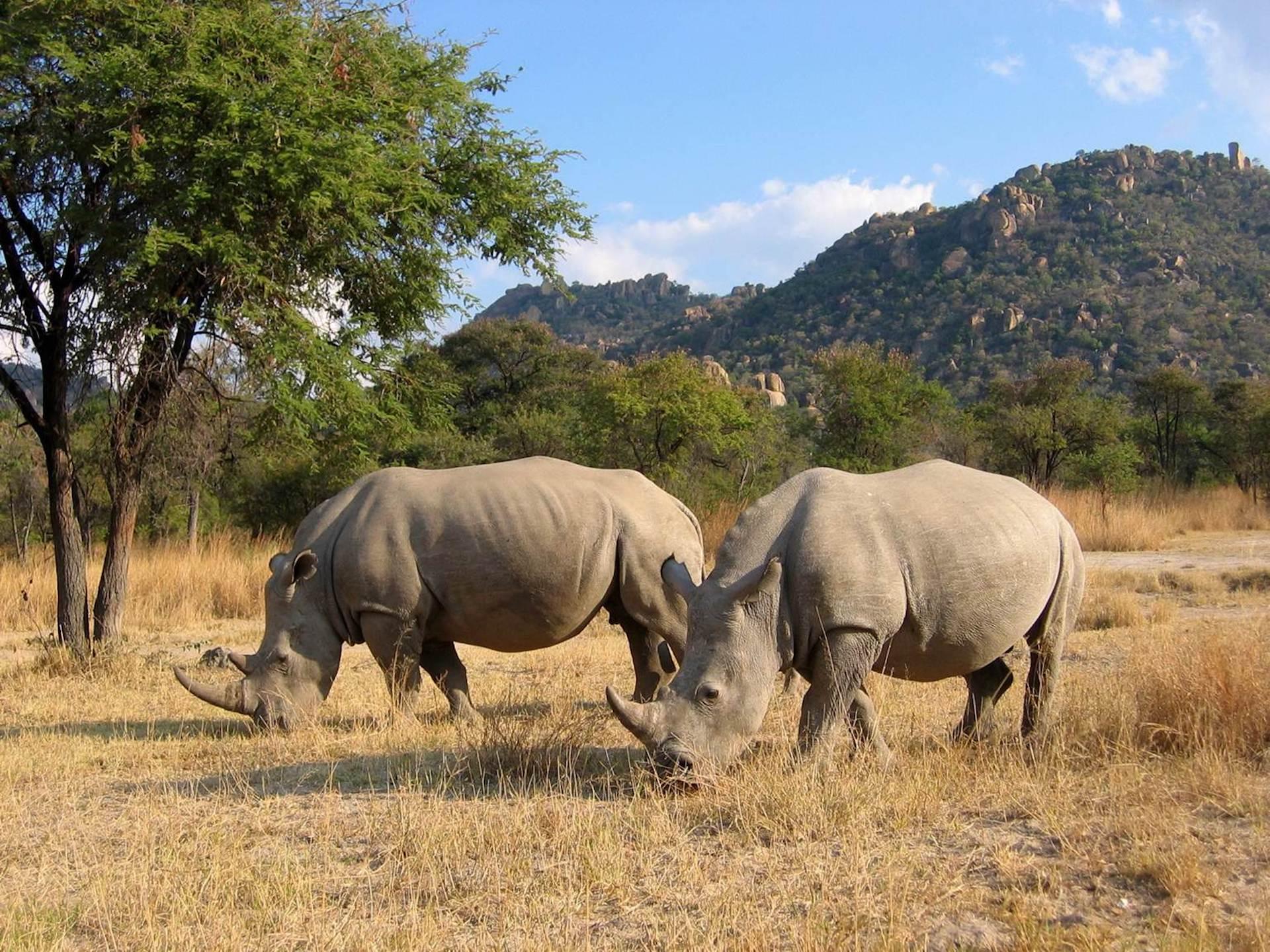 # FOTO - rhino