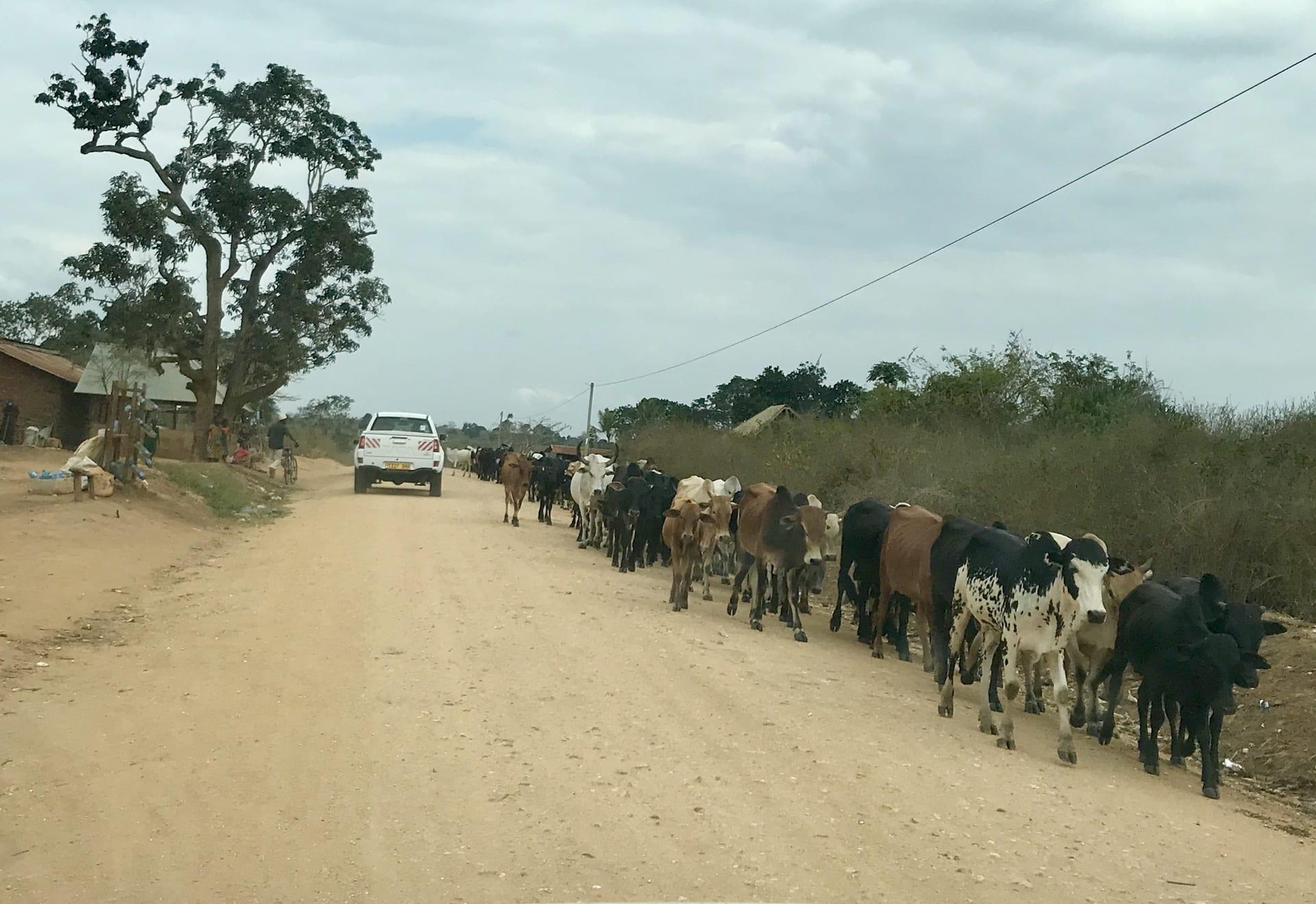 # FOTO - tanzania selfdrive - Route Mikumi - Kijongo Bay_4713
