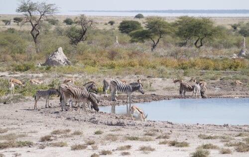 # KOPFOTO - NAM Etosha waterplaats met dieren 2015
