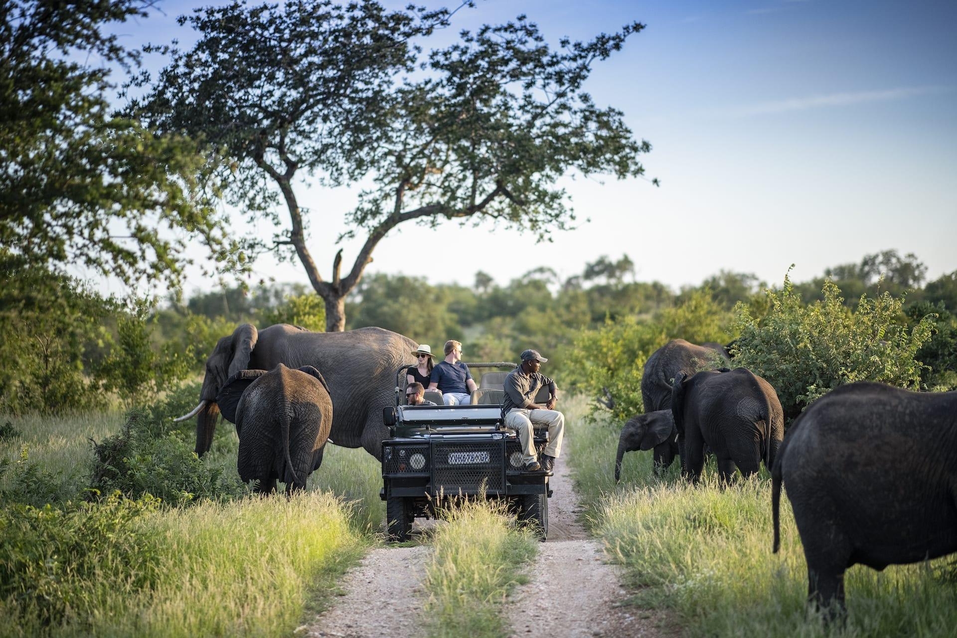 # ZA 17 - simbavati_safari_lodges_wildlife_28