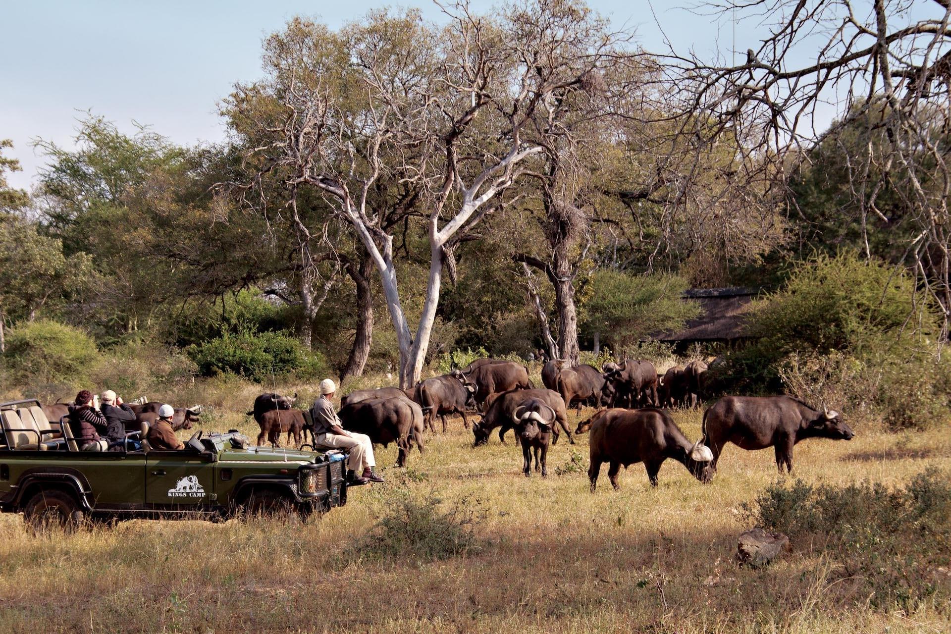 # ZA 19 - Kings Camp - kc_buffalo__camp_1_bp