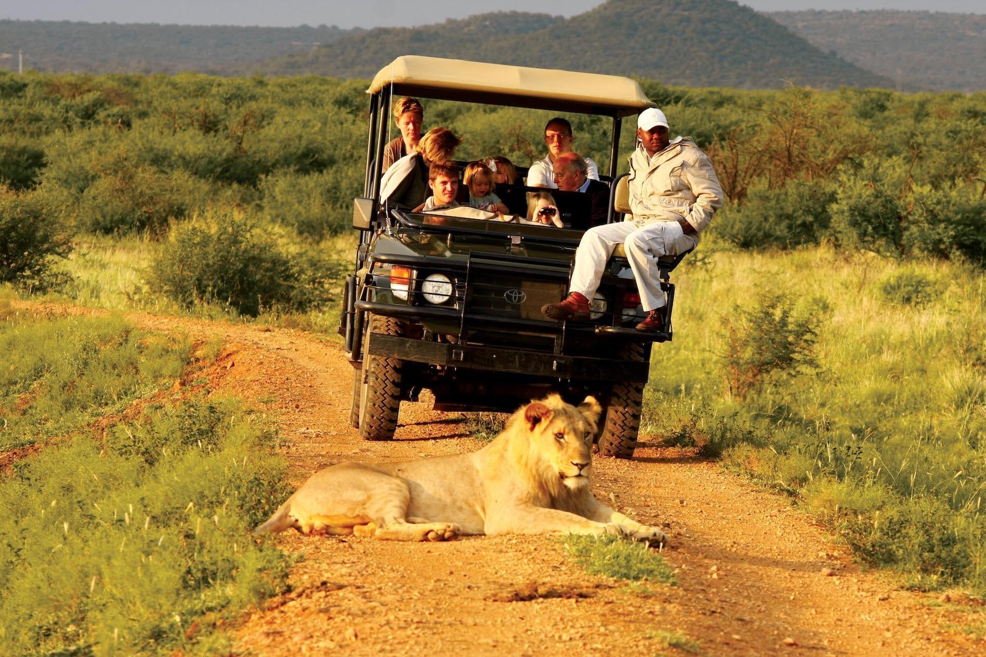 # ZA 19 - Madikwe Hills - Game Drive