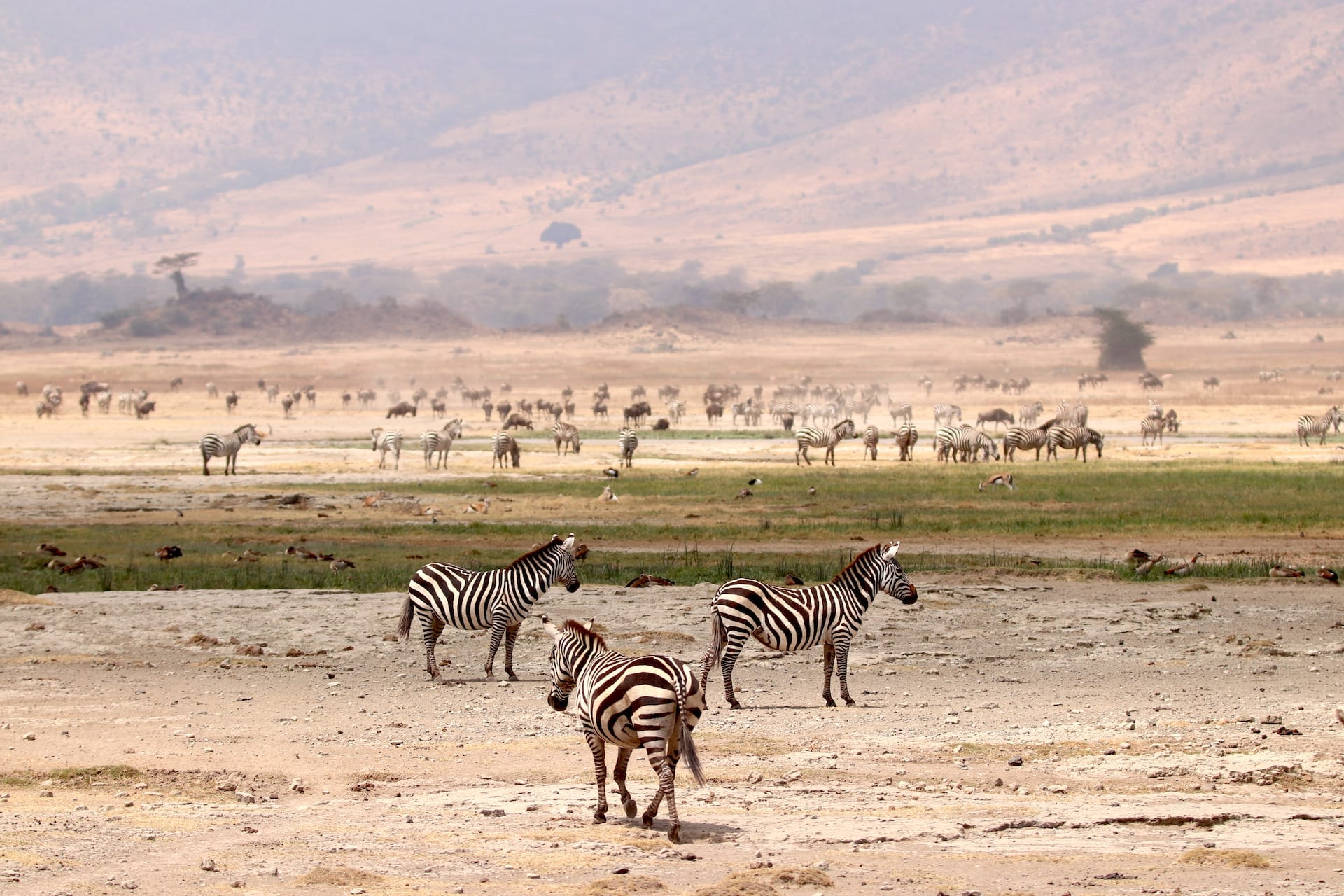 # FOTO - Ngorongoro Krater - IMG_1044