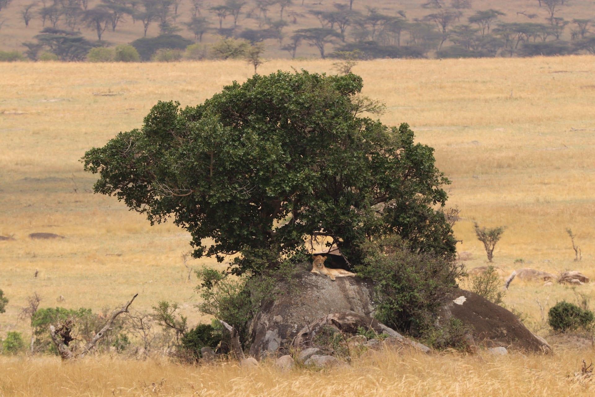 # FOTO - Serengeti Noord - IMG_1705