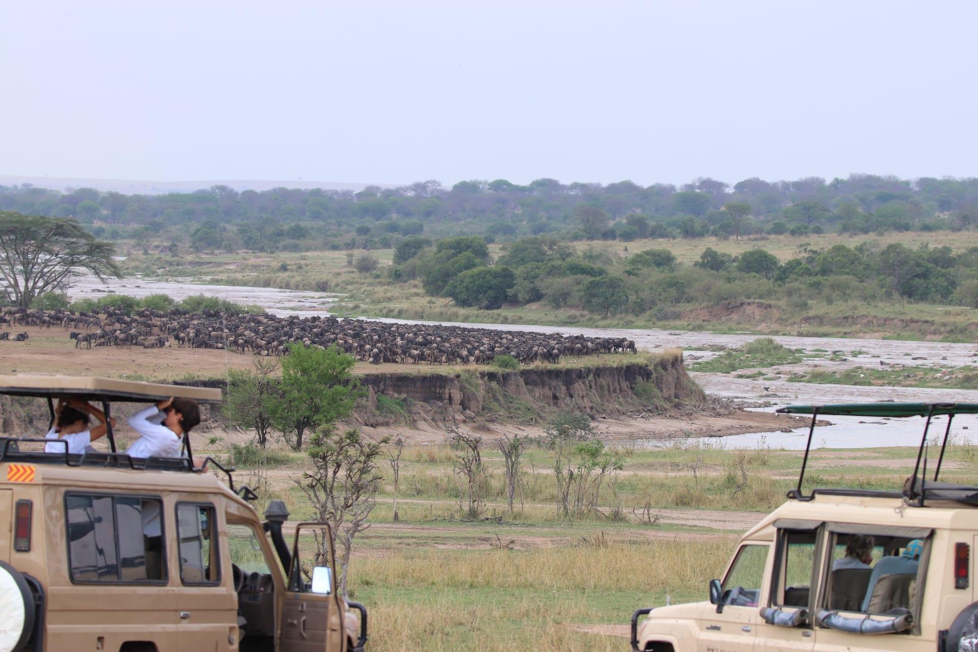 # FOTO - Serengeti Noord - IMG_1892