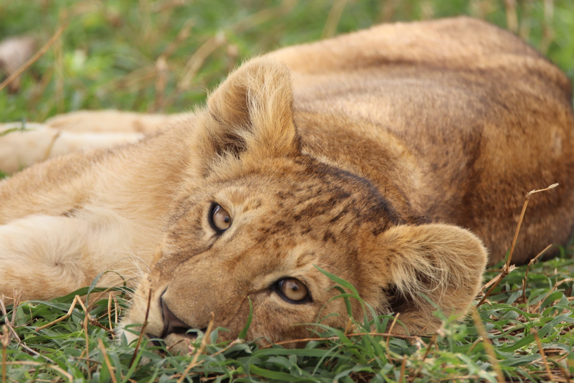 # FOTO - Serengeti Seronera - IMG_1418