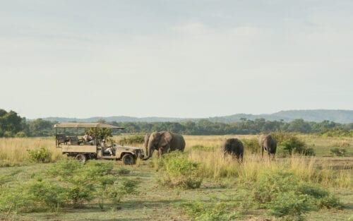 # KOPFOTO - Game drive 2019_4-2