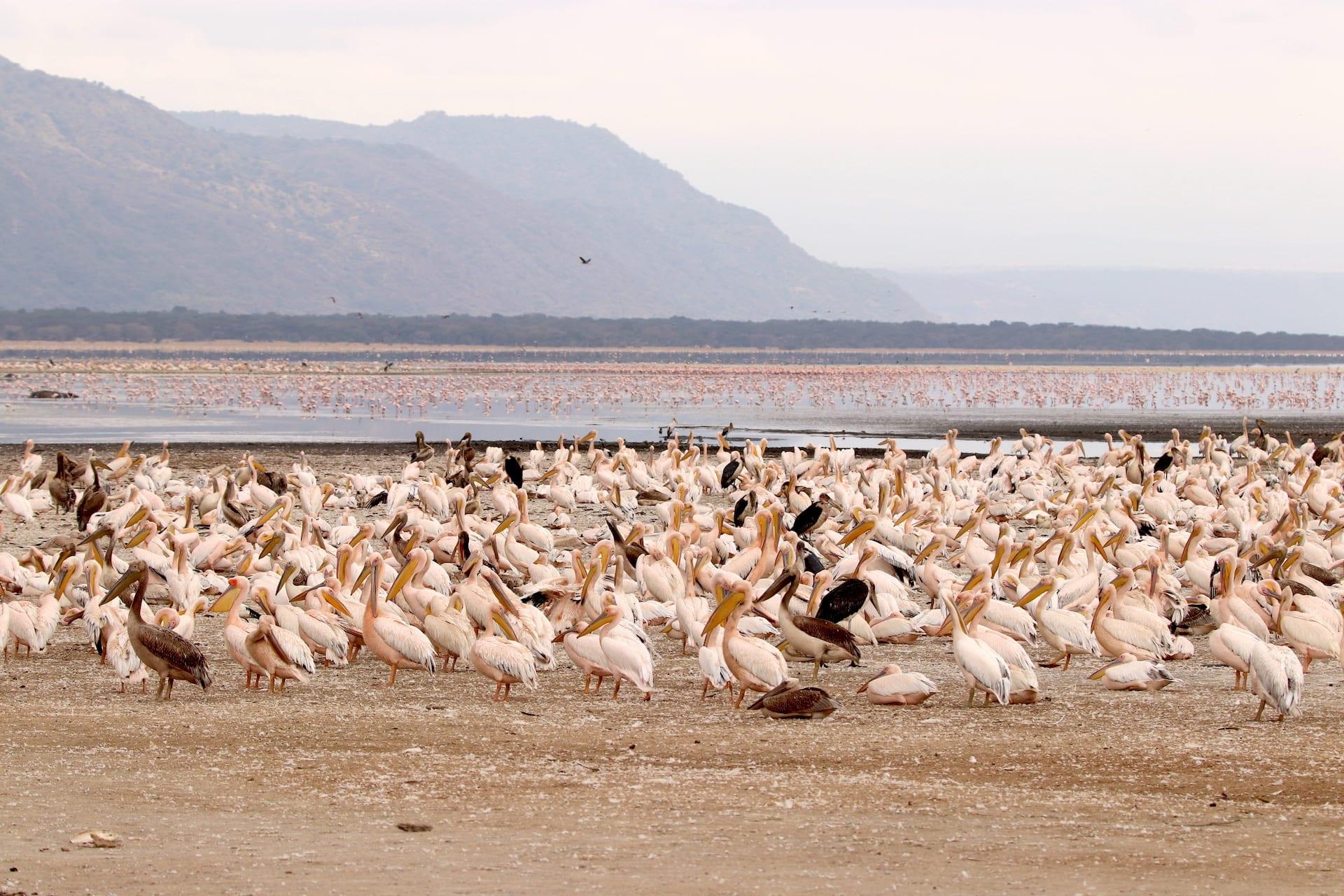 TZ 1 - Lake Manyara NP - IMG_0659