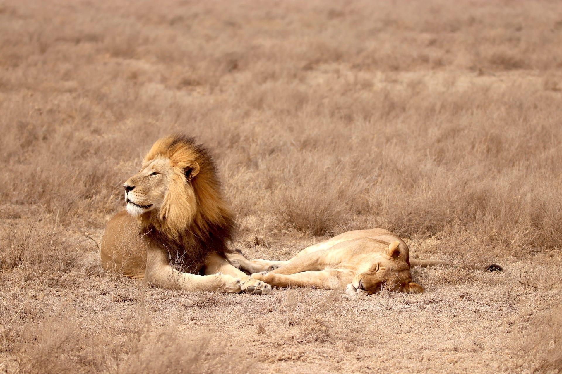 TZ 1 - Serengeti Seronera - IMG_1333