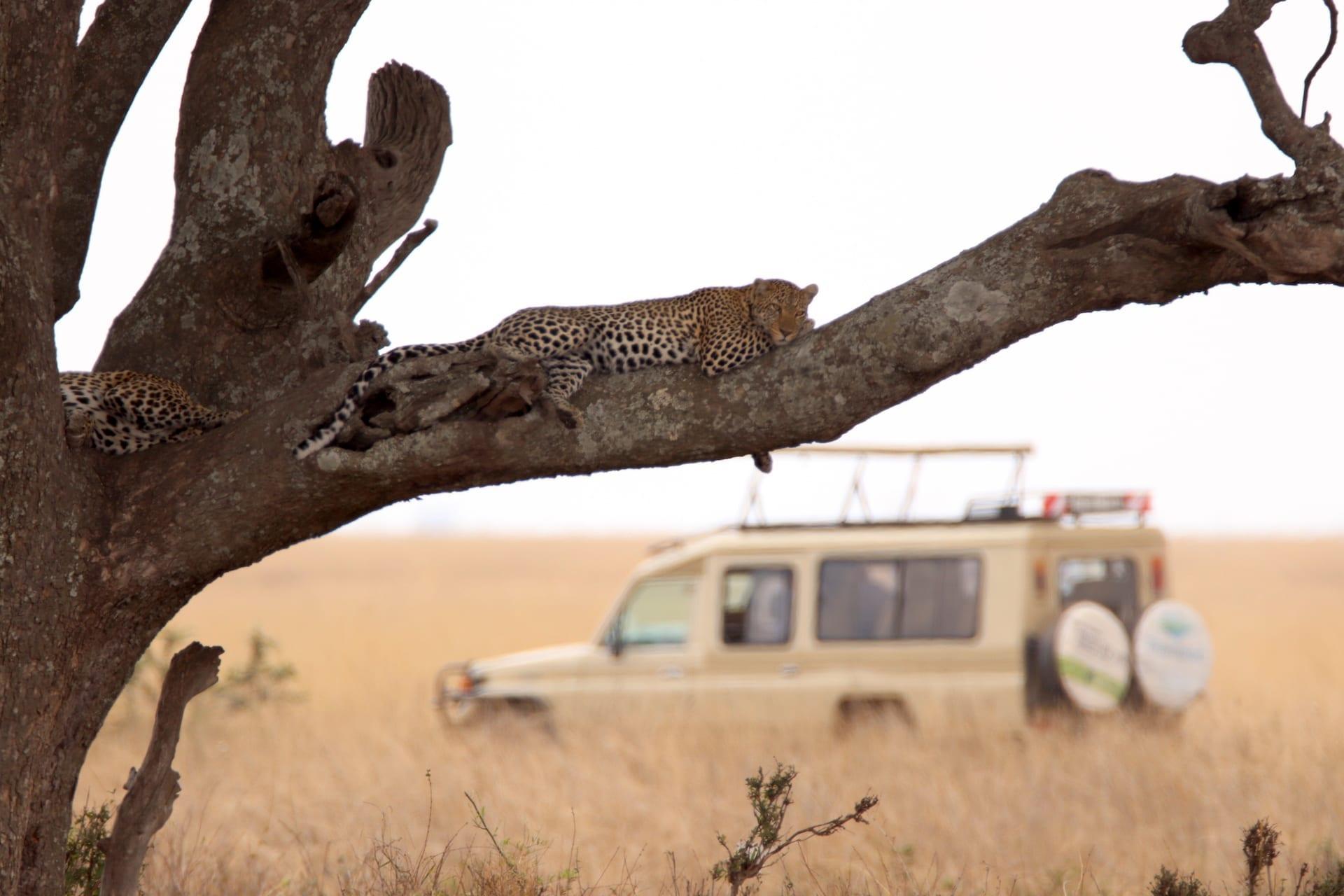TZ 1 - Serengeti Seronera - IMG_1535
