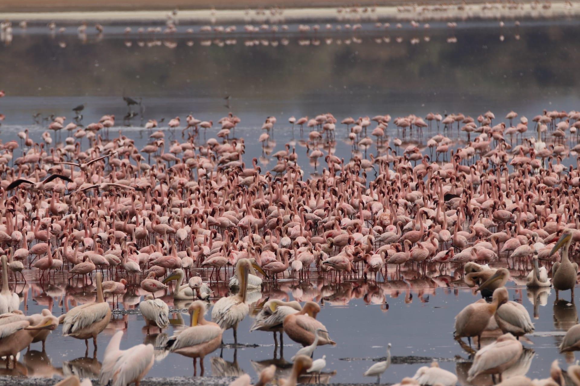 TZ 4 - Lake Manyara NP - IMG_0755