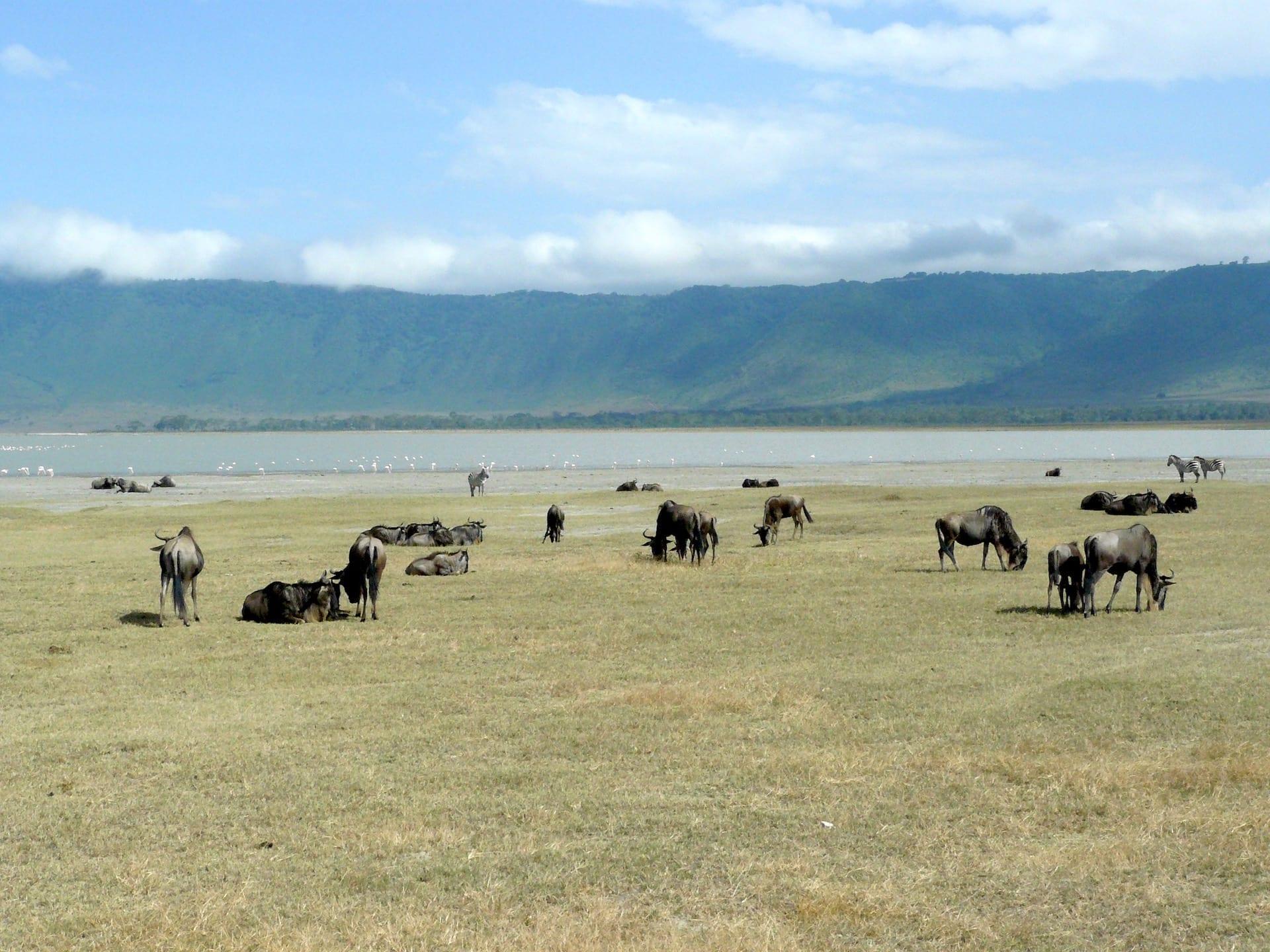 TZ 4 - Ngorongoro (3)