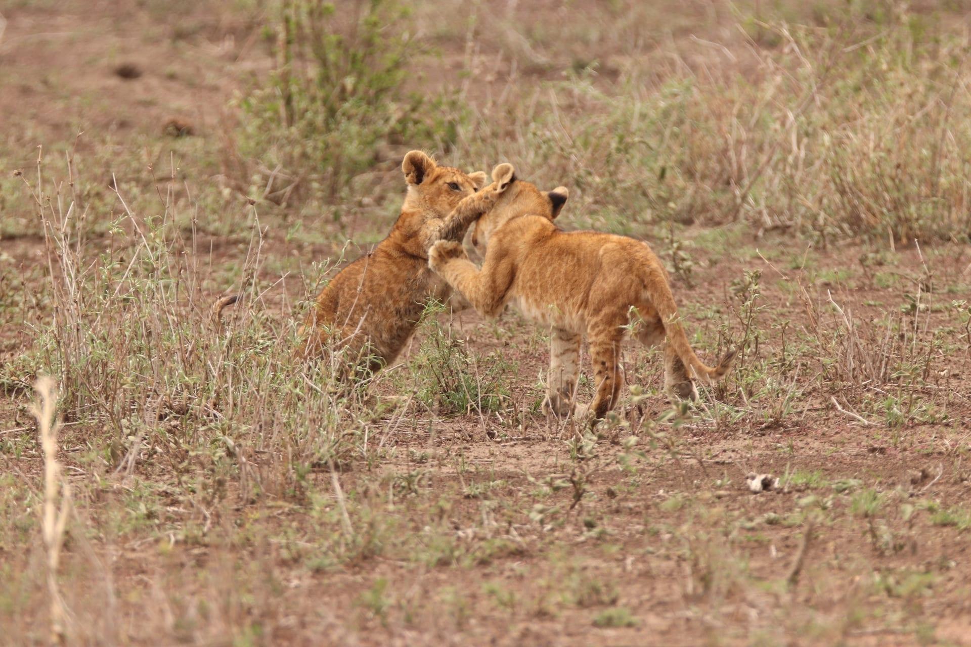 TZ 4 - Serengeti Seronera - IMG_1589